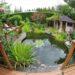 Jak się zabrać do budowy oczka wodnego w ogrodzie?
